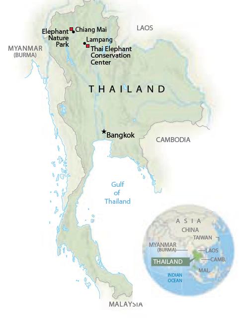 thailephant